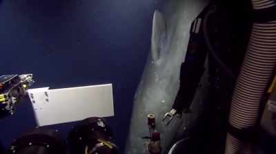 A sperm whale circled a robe-camera several times