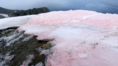 Pink snow is making glaciers melt even faster (Image: Liane G. Benning / GFZ)